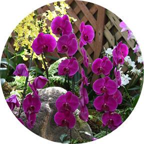胡蝶蘭などの観葉植物